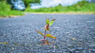 plant growing out of asphalt
