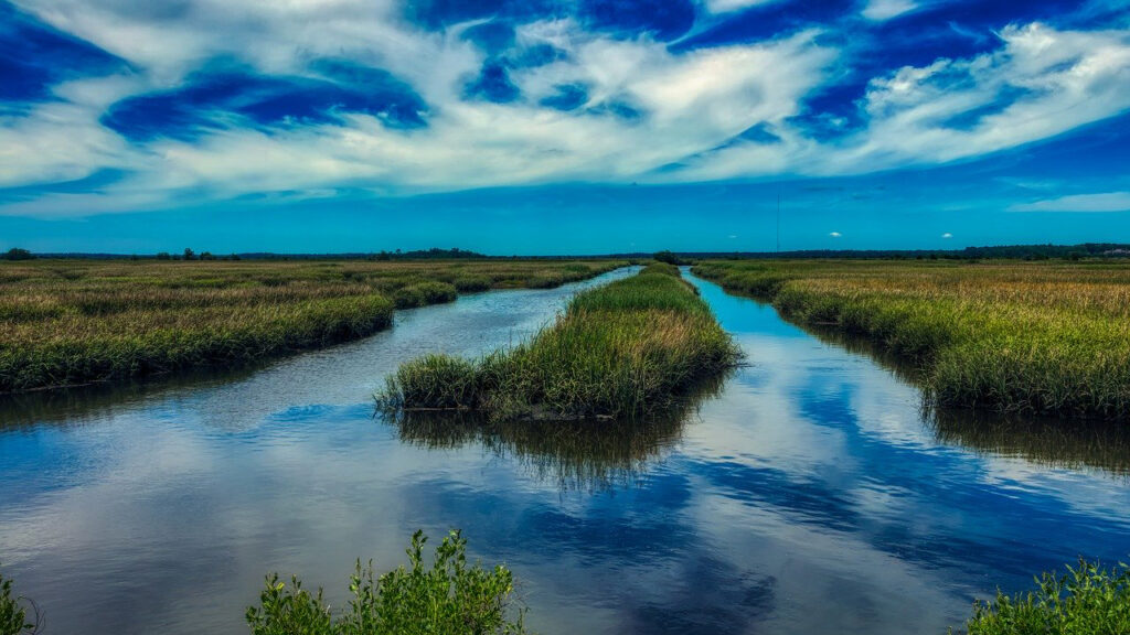 South Carolina marshland