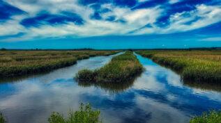 South Carolina marshland